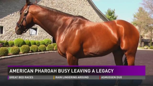 American Pharoah nears 100 pregnant mares with his foals since retirement